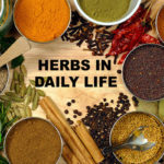 Herbs in Daily Life