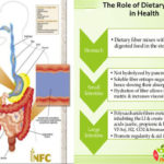 The Role of Dietary Fibre in Health
